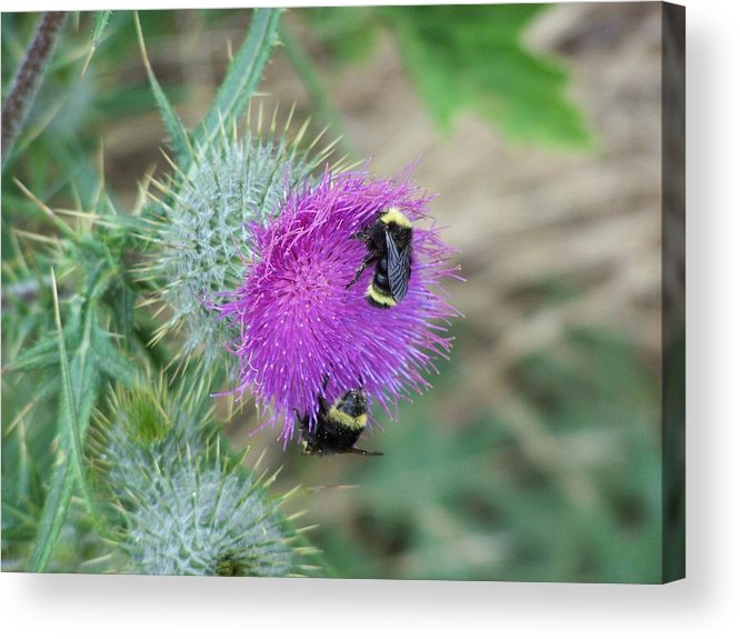 Flower Acrylic Print featuring the photograph Busy Bees by Gene Ritchhart