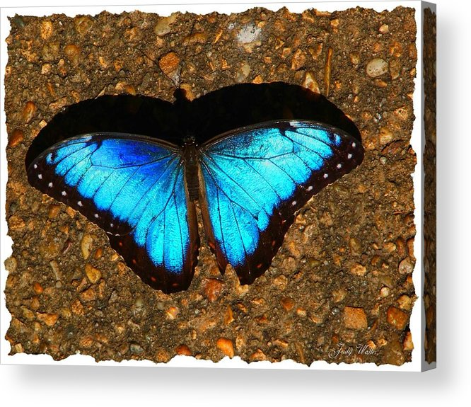 Shadow Acrylic Print featuring the photograph Butterfly Shadow by Judy Waller