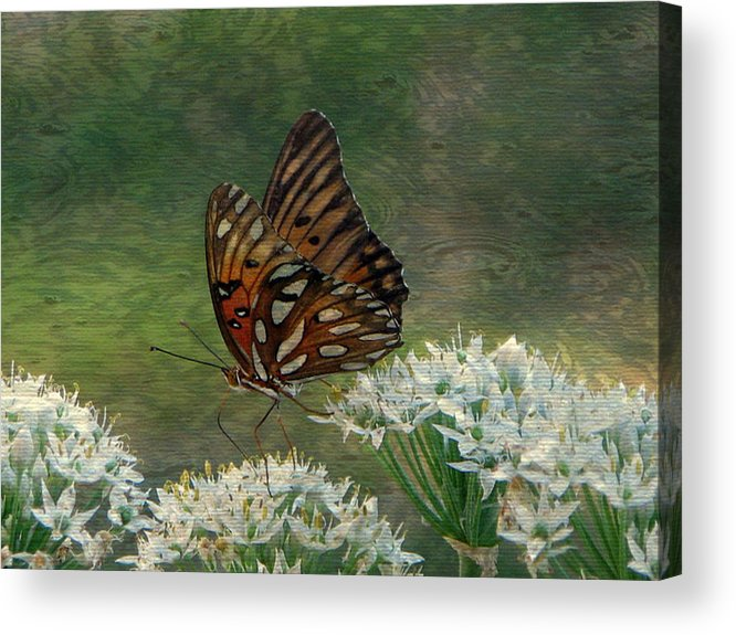 Butterfly Acrylic Print featuring the photograph Butterfly Waters by Dottie Dees