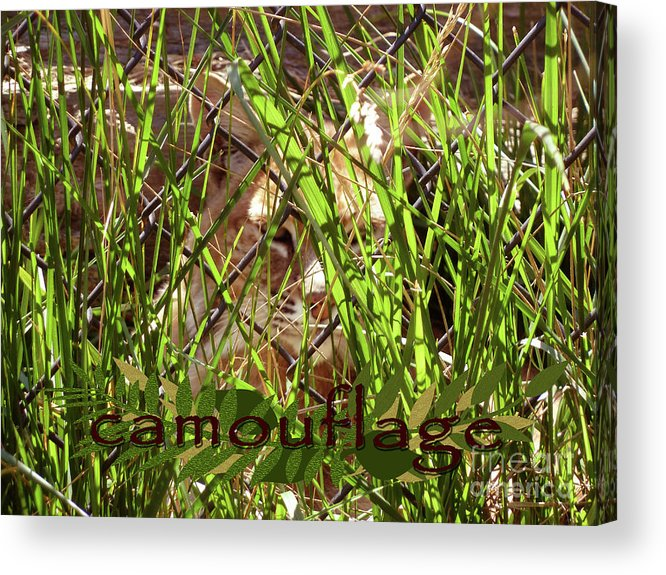 Camouflage Acrylic Print featuring the photograph Camouflage by Methune Hively