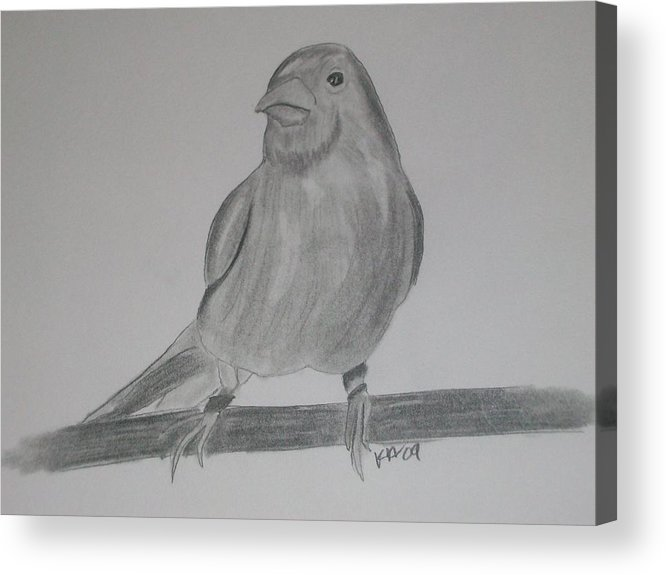 Bird Acrylic Print featuring the drawing Canary by Kristen Hurley