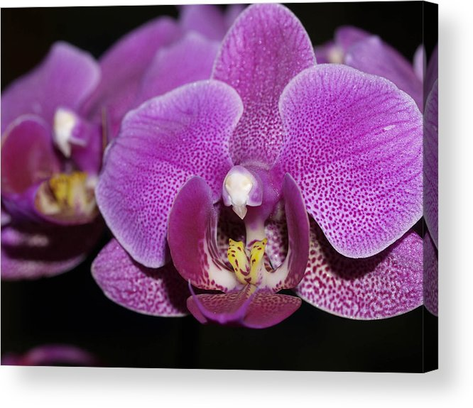 Orchids Acrylic Print featuring the photograph Center Of Attention by Joyce Hutchinson