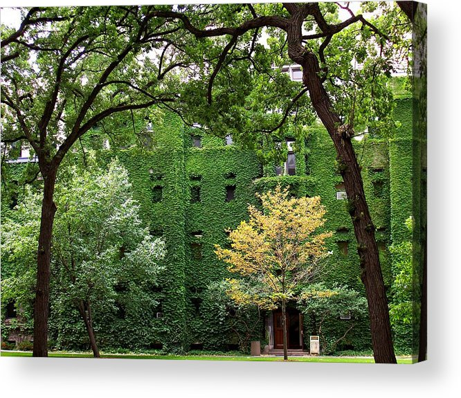 Ivy Acrylic Print featuring the photograph Chicago Campus by Caroline Eve Urbania