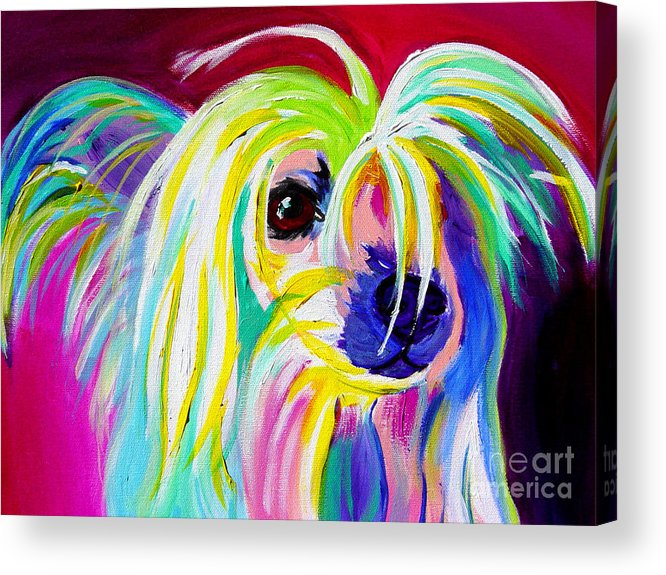 Dog Acrylic Print featuring the painting Chinese Crested - Fancy Pants by Alicia VanNoy Call
