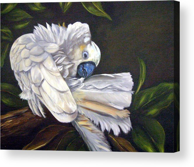 Birds Acrylic Print featuring the painting Cockatoo Preening by Anne Kushnick