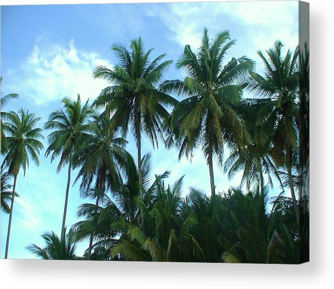 Coconut Acrylic Print featuring the photograph Coconut Trees by Nicholas Lim