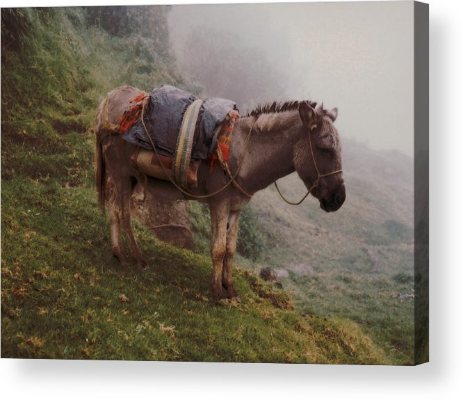 Donkey Acrylic Print featuring the photograph Colombian Burro In The Fog by Lawrence Costales
