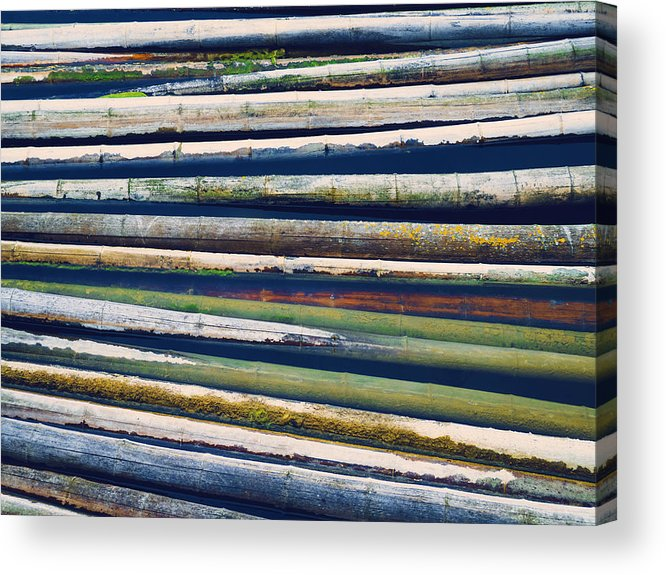 Bamboo Acrylic Print featuring the photograph Colorful Bamboo by Wim Lanclus