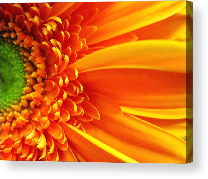 Red Acrylic Print featuring the photograph Colors Galore by Rhonda Barrett