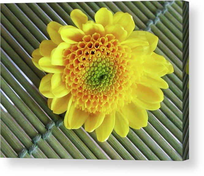 Spring Acrylic Print featuring the photograph Colors Of Spring by Vijay Sharon Govender