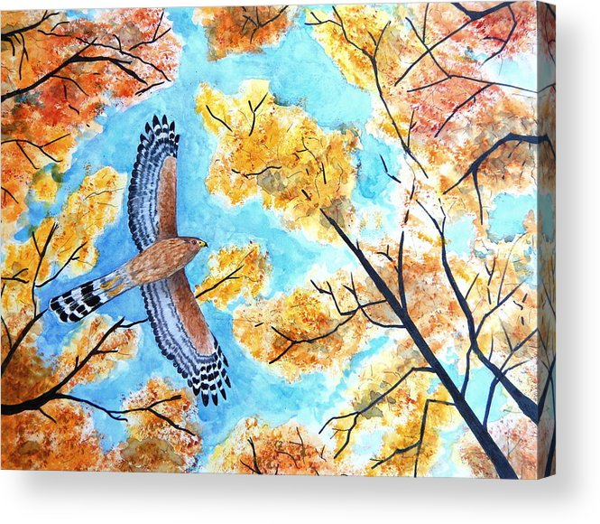 Cooper's Hawk Fall Autumn Leaves Trees Bird Nature Acrylic Print featuring the painting Cooper's In Autumn by Sarah McCord