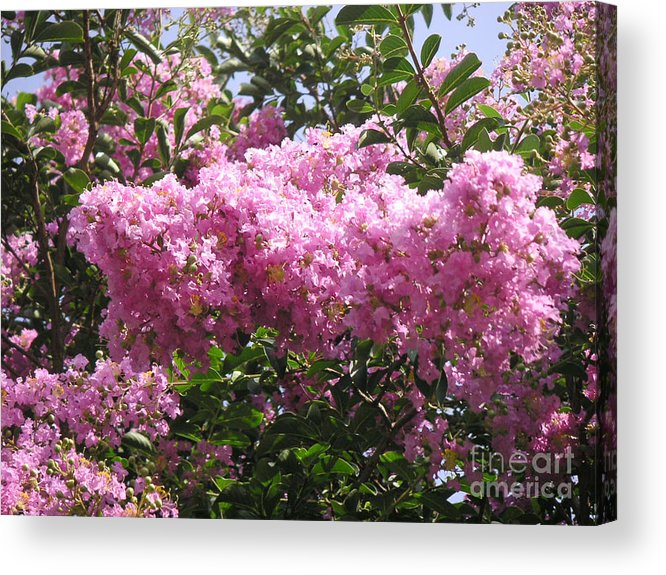 Nature Acrylic Print featuring the photograph Cotton Candy by Lucyna A M Green