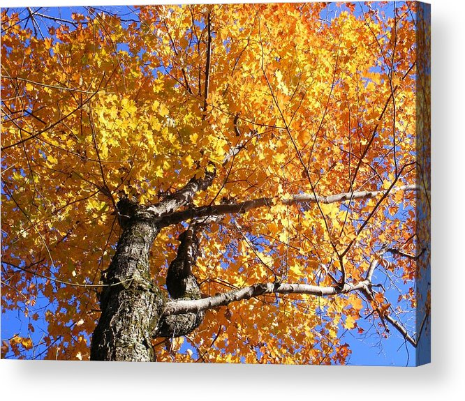 Trees Acrylic Print featuring the photograph Crown Fire by Dave Martsolf