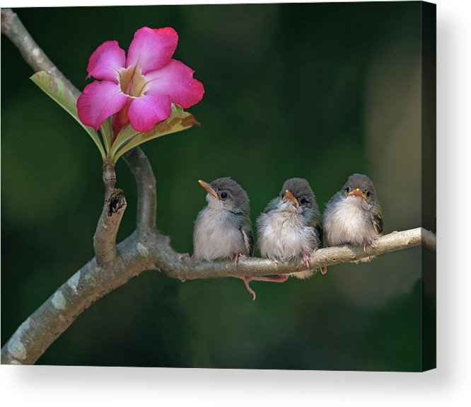 Horizontal Acrylic Print featuring the photograph Cute Small Birds by Photowork by Sijanto