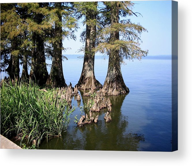 Reelfoot Lake Acrylic Print featuring the photograph Cypress by CGHepburn Scenic Photos