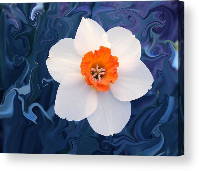 Flower Acrylic Print featuring the photograph Daffodill In Blue by Jim Darnall