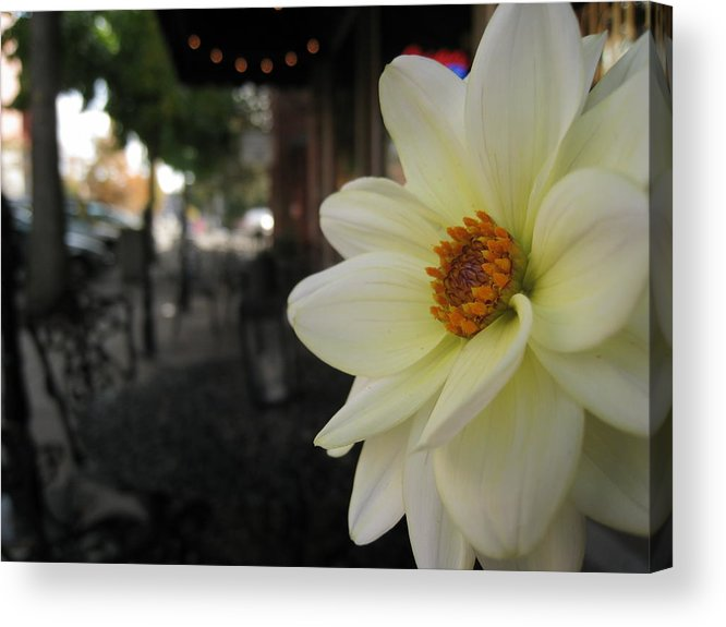 Dahlia Acrylic Print featuring the photograph Dahlia's View Point by Michael Lee