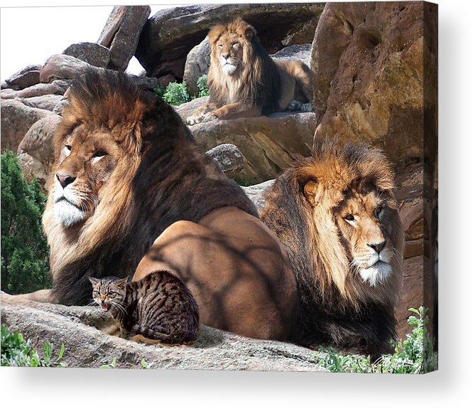 Lions Acrylic Print featuring the mixed media Daniel In The Lion by Bill Stephens