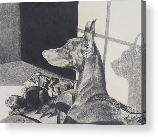 Doberman Acrylic Print featuring the drawing Day Dreams by Cynthia Riley