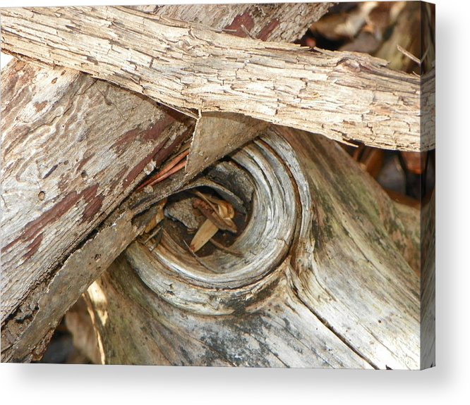 Nature Acrylic Print featuring the photograph Dead Eye Tumble Wood by Randy Robinson