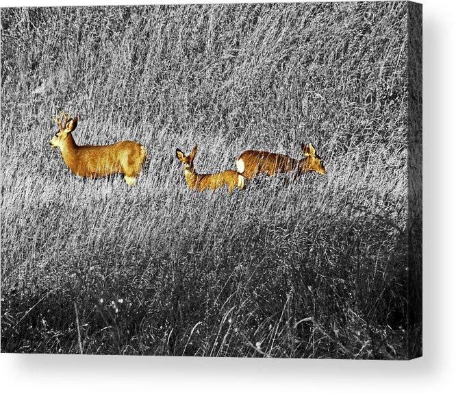 Al Bourassa Acrylic Print featuring the photograph Deer Family by Al Bourassa