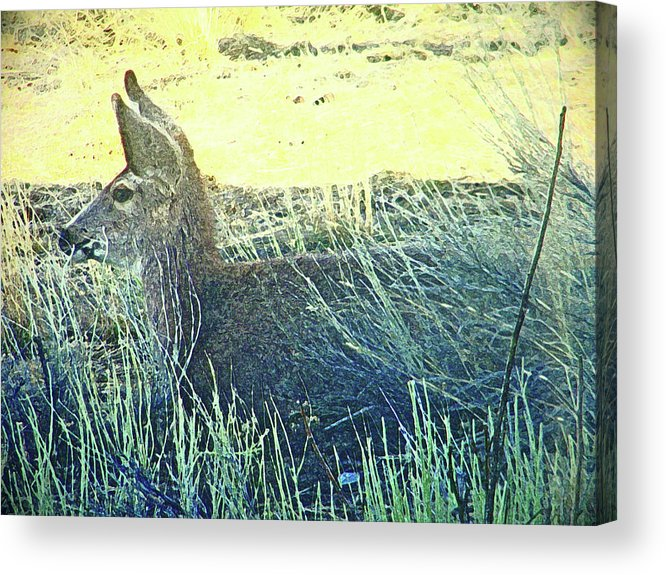 Abstract Acrylic Print featuring the photograph Deer Lying Down by Lenore Senior