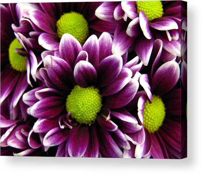 Purple Acrylic Print featuring the photograph Delicate Purple by Rhonda Barrett