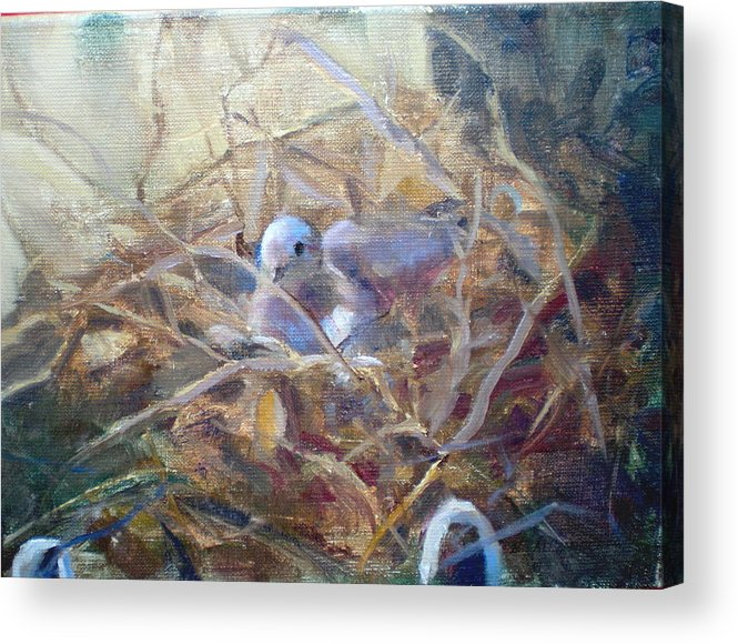 Dove Planter Nest Earth Colors Acrylic Print featuring the painting Dove Nesting by Bryan Alexander