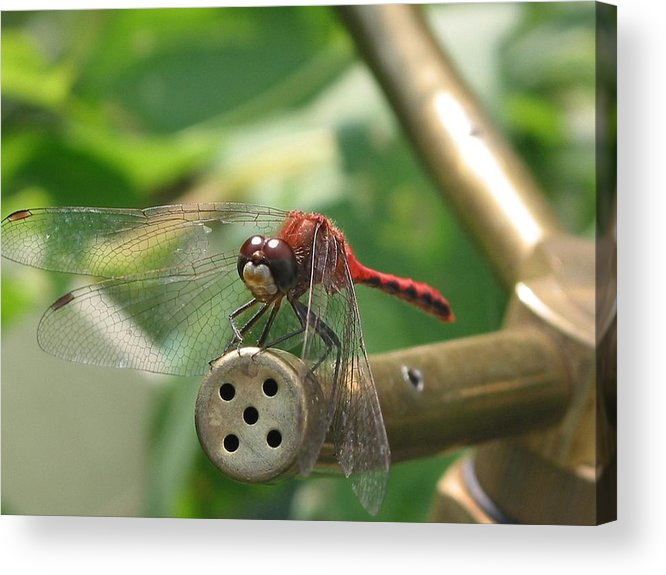 Dragon Acrylic Print featuring the photograph Dragon By by Rich Tanguay