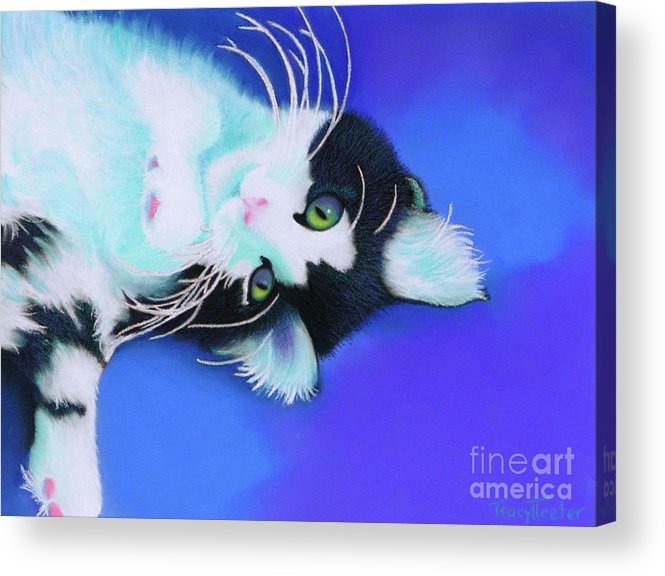 Cat Acrylic Print featuring the pastel Dreamer by Tracy L Teeter