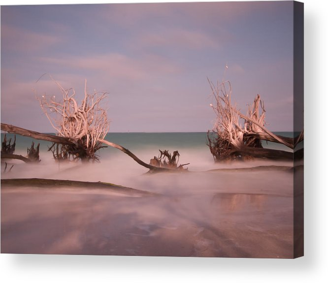 Driftwood Acrylic Print featuring the photograph Driftwood 4121889 by Rolf Bertram