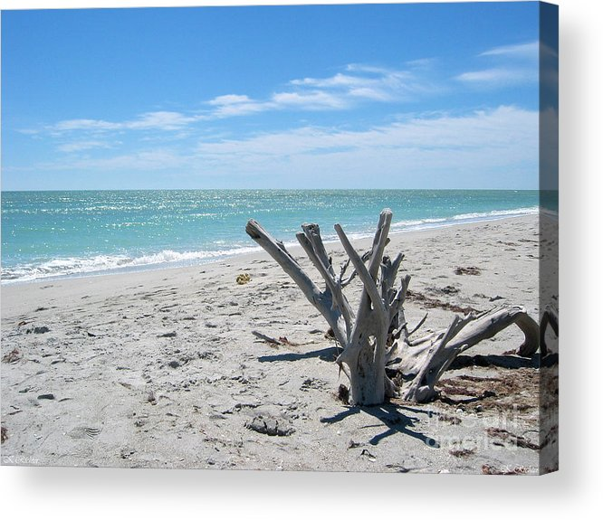 Driftwood Acrylic Print featuring the photograph Driftwood by Keiko Richter