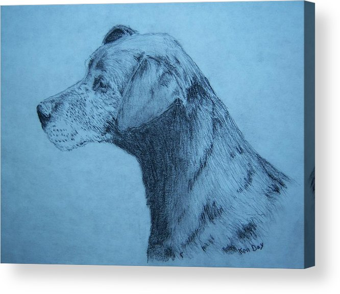 Dog Pet Friend Acrylic Print featuring the drawing Dudley by Ken Day