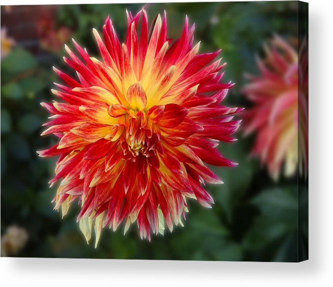 Flowers Acrylic Print featuring the photograph Explosion by Roberto Alamino