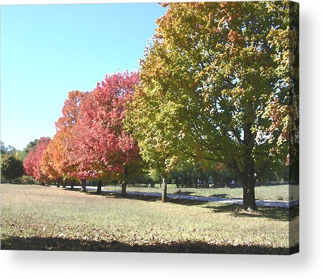Trees Acrylic Print featuring the photograph Fall by Audrey Venute