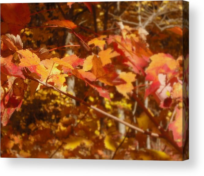 Orange Acrylic Print featuring the photograph Fall Color by John Julio