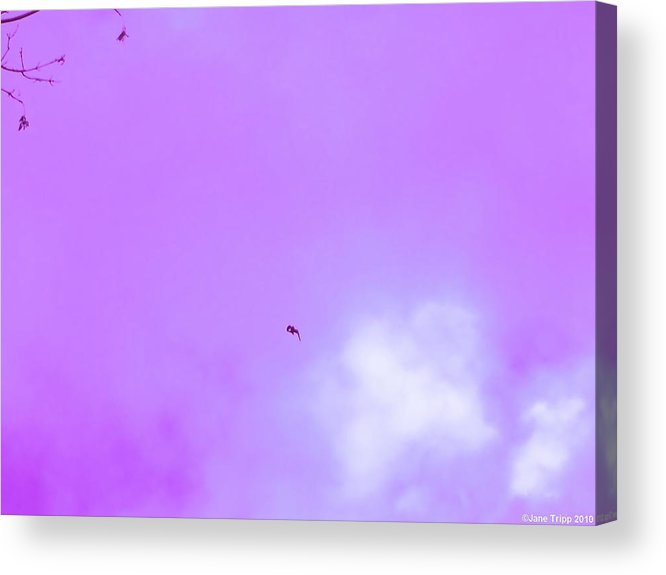 Impressionistic Sky Photograph Acrylic Print featuring the photograph Fall by Jane Tripp