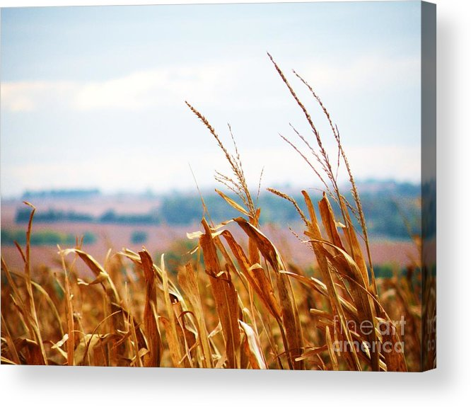 Fall Acrylic Print featuring the photograph Fall Memories by Christine Belt