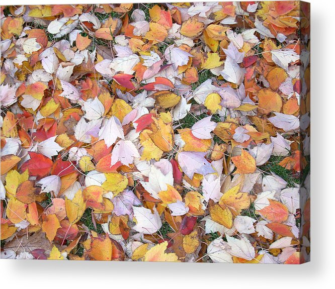 Photography Fall Autum Leaves Acrylic Print featuring the photograph Fallen Fantasy by Karin Dawn Kelshall- Best