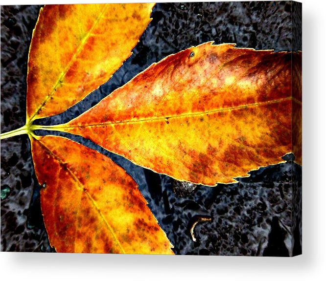 Orange Acrylic Print featuring the photograph Fallen Leaves by Beth Akerman