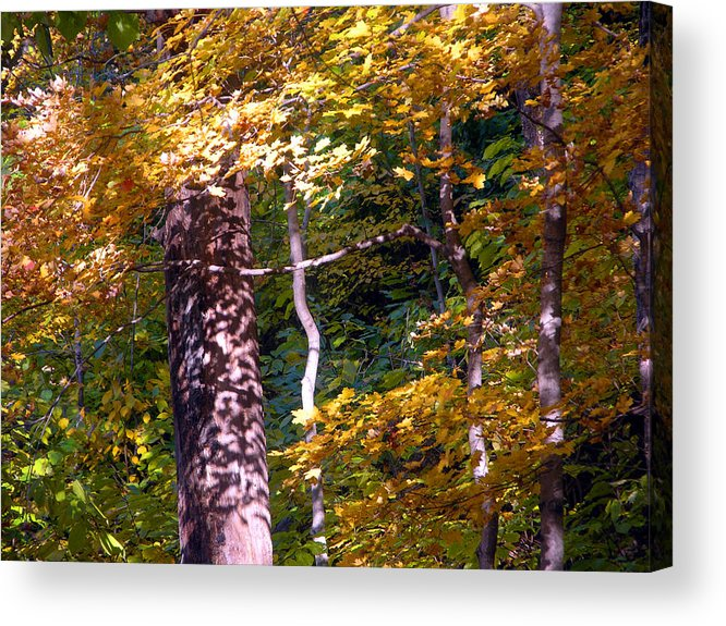 Fall Trees Acrylic Print featuring the photograph Falls Splendor by John Lautermilch