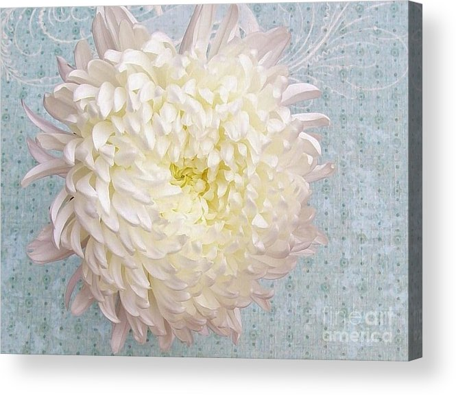 Photo Acrylic Print featuring the photograph Feathered Mum Close Up by Marsha Heiken
