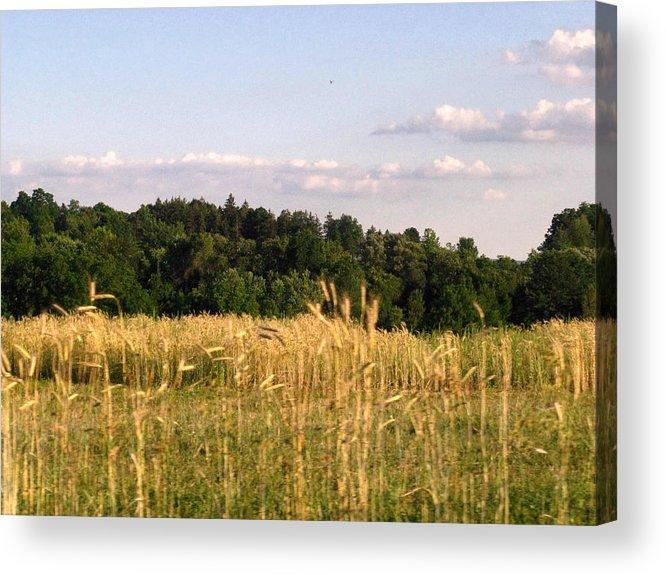 Field Acrylic Print featuring the photograph Fields Of Grain by Rhonda Barrett