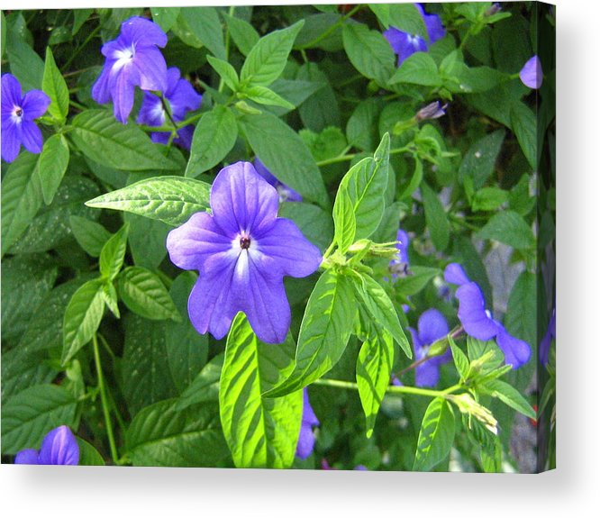 Flower Acrylic Print featuring the photograph Floral Photo by Melissa Parks
