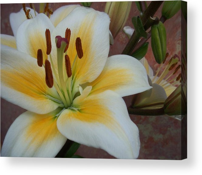 Flower Acrylic Print featuring the photograph Flower Close Up 3 by Anita Burgermeister