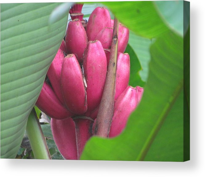 Flower Acrylic Print featuring the photograph Flower by Patti Valenti