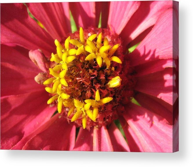 Flower Acrylic Print featuring the photograph Flowers With In The Flower by Rebecca Shupp