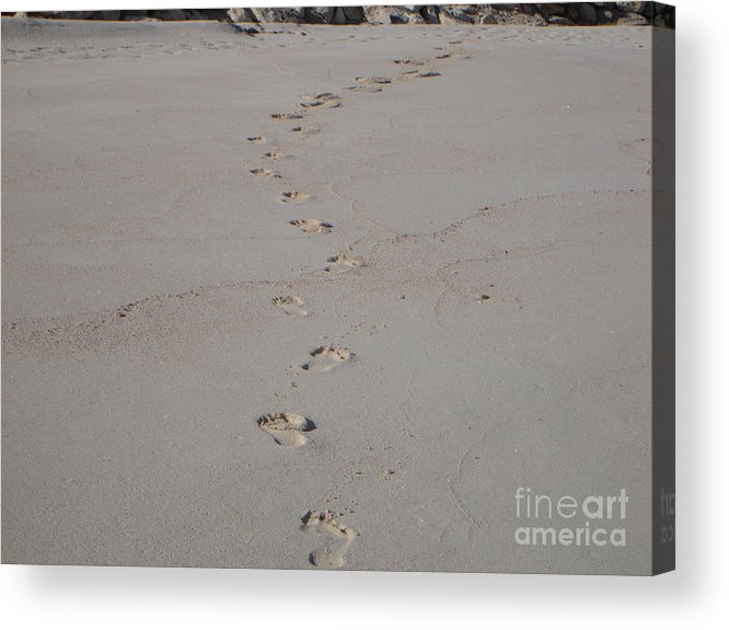 Sand Acrylic Print featuring the photograph Follow Me by PJ Cloud