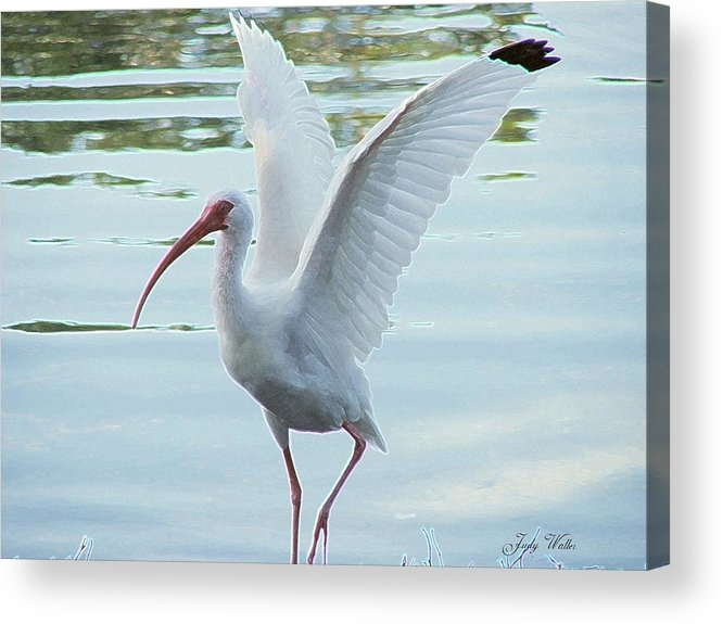 Wings Acrylic Print featuring the photograph Freedom by Judy Waller