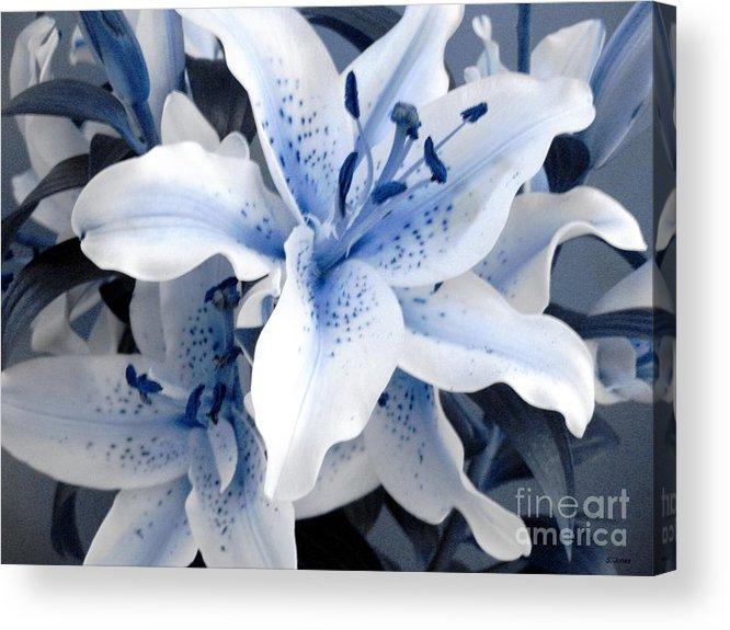 Blue Acrylic Print featuring the photograph Freeze by Shelley Jones